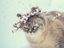 Siamese katje in een Kerstmiskroon stock foto's