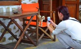 Siamese kattunge för kvinnasmartphonekort Fotografering för Bildbyråer