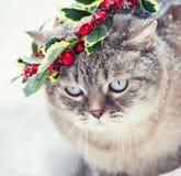 Siamese kattunge i en julkrans royaltyfria bilder