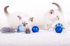 Siamese kitten with blue Christmas balls royalty free stock image