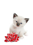 Siamese Kitten With Bow. A little, Snowshoe Lynx-point Siamese kitten sitting next to a red and silver foil bow.  Shot against white background Royalty Free Stock Photo