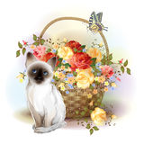 Siamese kitten, butterfly and roses Stock Photography