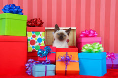 Siamese kitten in christmas presents Stock Photos