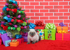 Siamese kitten by Christmas tree Royalty Free Stock Image