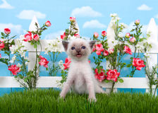 Siamese kitten in flower garden on grass Stock Photos