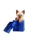 Siamese kitten in a gift box Stock Photography