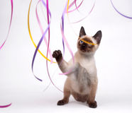 Siamese kitten playing with ribbon Royalty Free Stock Image