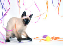 Siamese kitten and ribbons Royalty Free Stock Photography