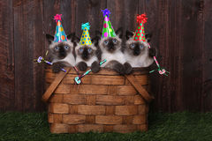 Siamese Kittens Celebrating a Birthday With Hats Stock Image