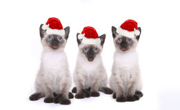 Siamese Kittens Celebrating a Birthday With Hats Royalty Free Stock Photography
