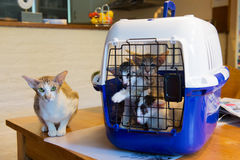 Siamese mother cat with kitten in cage Royalty Free Stock Photo