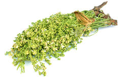 Siamese neem tree, Nim, Margosa, Quinine (Azadirachta indica A. Stock Photo