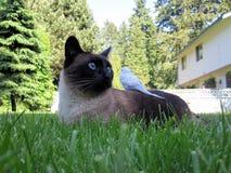 Siamese & Parakeet royalty free stock photography
