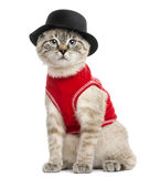 Siamese with red top and top hat, sitting Royalty Free Stock Image