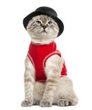 Siamese with red top and top hat, sitting, 5 months old Royalty Free Stock Images
