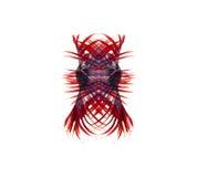 Siamese stridighetfisk, bettafisk på vit bakgrund Royaltyfri Fotografi