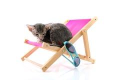Siamese strimmig kattkattunge på strandstol Royaltyfri Fotografi