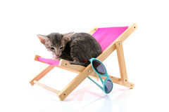 Siamese tabby kitten on beach chair Royalty Free Stock Photography