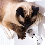 A Siamese Thai cat lies on a white cool radiator in anticipation of heat. Stock Images