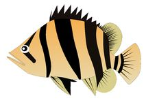 Siames tiger fish Royalty Free Stock Photos