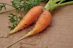 Siamese twin carrot. Siamese twin misshapen carrot at the farmers market Royalty Free Stock Photos