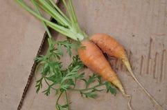Siamese twin carrot Stock Photo