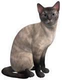 Siamesische Cat Sitting lokalisierte Illustration Stockfoto