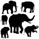 Siamesische Elefanten Lizenzfreie Stockfotografie