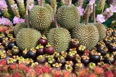 Siamesische Früchte Lizenzfreies Stockbild