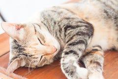 Siamesische Katze, die auf Holztisch schläft Lizenzfreie Stockfotos