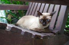 Siamesische Katze, die entlang des Vogels auf Baumast anstarrt Lizenzfreies Stockfoto