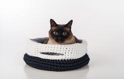 Siamesische Katze, die im handgemachten Korb liegt Gerade schauen Weißer Hintergrund Lizenzfreies Stockbild