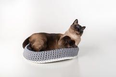 Siamesische Katze, die im handgemachten Korb liegt und oben schaut Weißer Hintergrund Stockbild