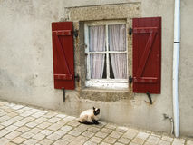 Siamesische Katze, die unter einem roten Fenster sitzt Lizenzfreies Stockbild