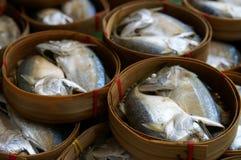 Siamesische Makrele stockbilder