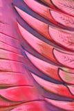 Siamesischer Artkunstanstrich lizenzfreie stockfotos