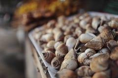 Siamesischer Markt Stockbild