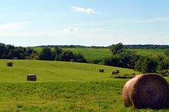 Siana pole W popołudniu Zdjęcie Royalty Free