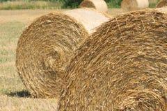 Siana rolowniki na polu w lecie Obrazy Royalty Free