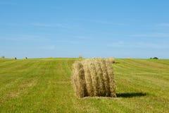 Siano bele na polu po żniwa Zdjęcie Royalty Free