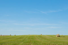Siano bele na polu po żniwa Fotografia Stock