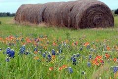 Siano rolki w kwitnących łubinach i hindus szczotkują Teksas, sezonu bluebonnet obraz stock