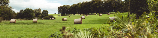 Siano rolki w zielenieją pole na Irlandzkiej wsi Obrazy Royalty Free