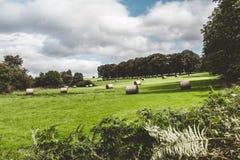 Siano rolki w zielenieją pole na Irlandzkiej wsi Zdjęcia Royalty Free