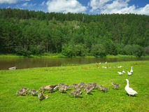 Siano rzeka Rosja, Południowy Ural Obrazy Stock