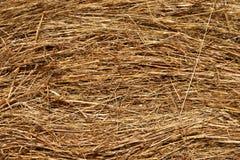 Siano, suchej trawy tekstura Zdjęcia Stock
