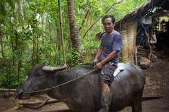 Siargao,菲律宾- 2016年3月18日:未认出的菲律宾人乘坐母牛水牛 本机的坚苦工作 图库摄影