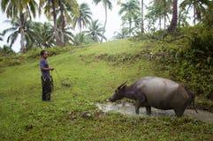 Siargao,菲律宾- 2016年3月18日:未认出的菲律宾人吃草牛水牛 本机的坚苦工作 库存照片