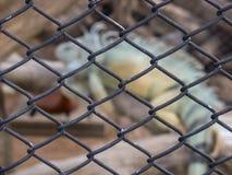 siatka w zoo Zdjęcie Stock