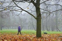 Lithuania,city Siauliai.Foggy autumn morning in park. stock image